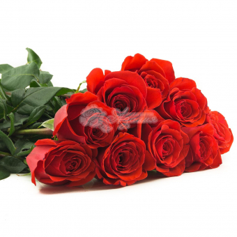 Высокая красная роза поштучно